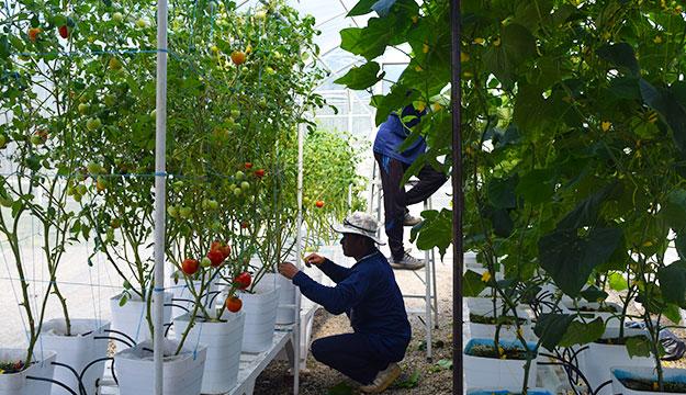 hydroponics school farm